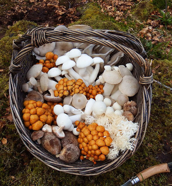 Ballyhoura Mountain Mushrooms , About Us
