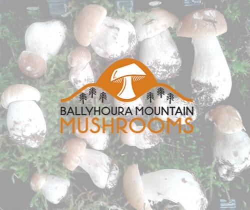 mushrooms_logo_