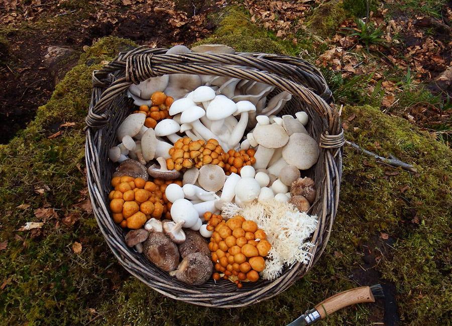 Ballyhoura Mountain Mushroom